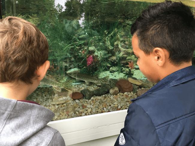 Découverte de la caravane aquarium